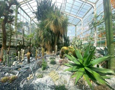 Zurich Succulent Plant Collection (Cloudia Chen)